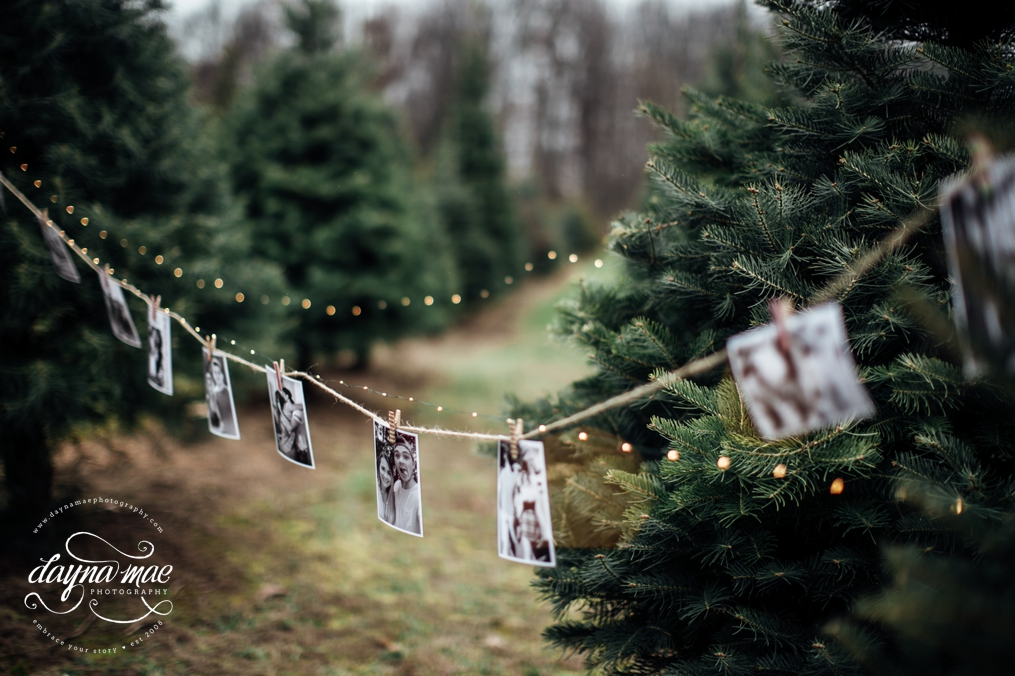 Tree Farm Proposal / Ann Arbor Wedding